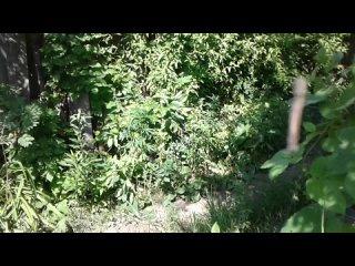 Гусеница - воздушный акробат-1