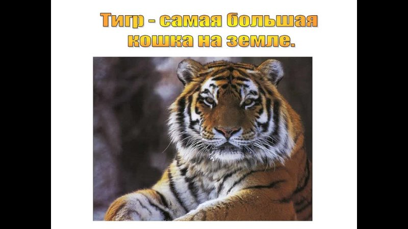 Видео от МБУ БИС Филиал №10 г Оренбург