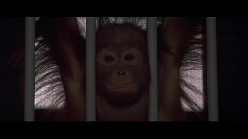 Кино Планета обезьян Planet of the Apes
