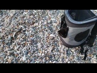 "Video by ПРИЮТ ""ФЕНИКС"" г.Азов"