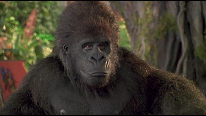 Фрагмент из Джордж из джунглей закадровый перевод Студия AB Видео по заказу Первый Канал ОРТ СТС
