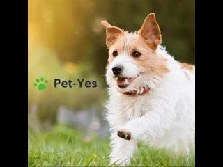 Video by Биржа домашних животных «Pet-Yes»