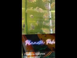"Video by Планета покупок ""Зоомагазин"""