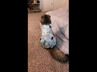 Video by Ох уж эти Хвостики!