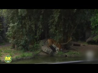 Видео от Неклюдовский ДК