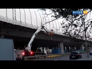 Рабочие с помощью автоподъемника сняли кота с путепровода КАД