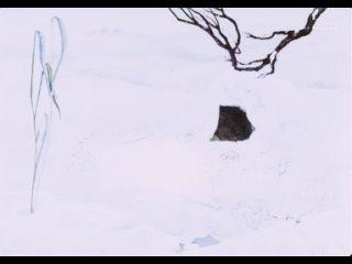 Веселая карусель. №11. Хитрые старушки. Про черепаху. Погоня. 1980