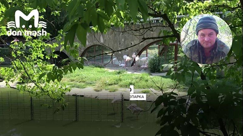 Впервые за 10 лет в ростовском зоопарке родились четыре маленьких фламинго