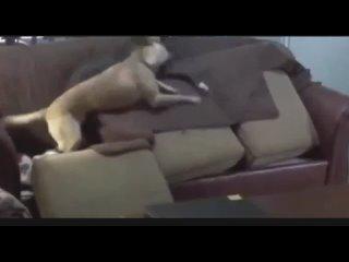 Video by Sergey Boev