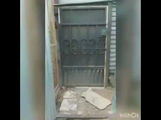 """Video by БФ защиты животных """" Право на жизнь"""" (г. Тутаев)"""