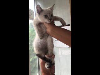 Video by «Лапа помощи бездомным животным г.Уфа»