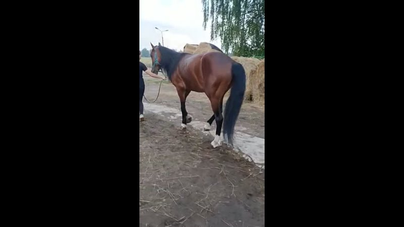 Видео от Спасение и помощь лошадям