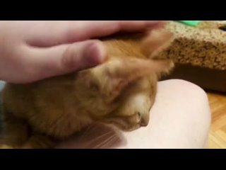 Video by Anastasia Mikheeva