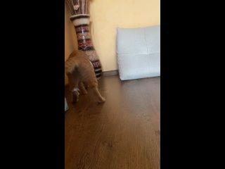 Видео от Иришки Котик