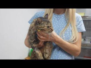 Видео от Приют для пострадавших животных «КРАСНОДОГ»