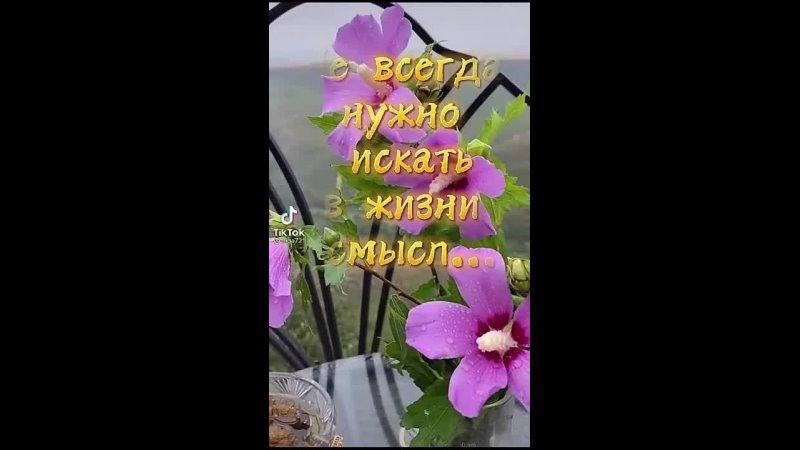 Видео от Ольги Стефанчук