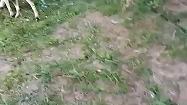Видео от ВОЛОНТЕРСКИЙ АКТИВ «БАРБОСКИН&»