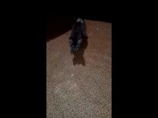 Video by Fayagul Borisova