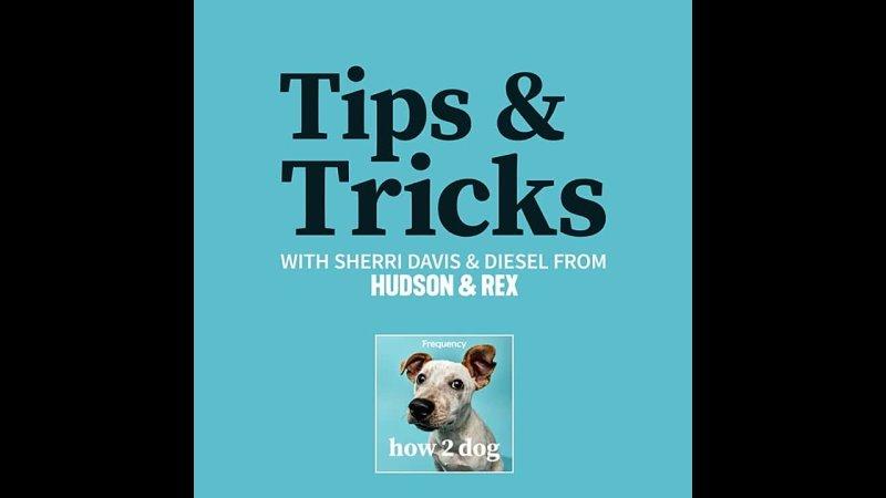 How2Dog Tips Tricks with Sherri Davis Ep 7 ENG