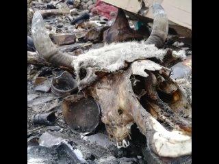 Кладбище недомашних животных: пригород Красноярска превратили в скотомогильник