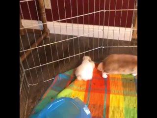 кролики жидкие!