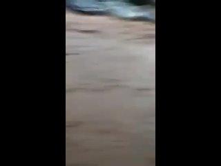 Video by TELEGRAM NEWS