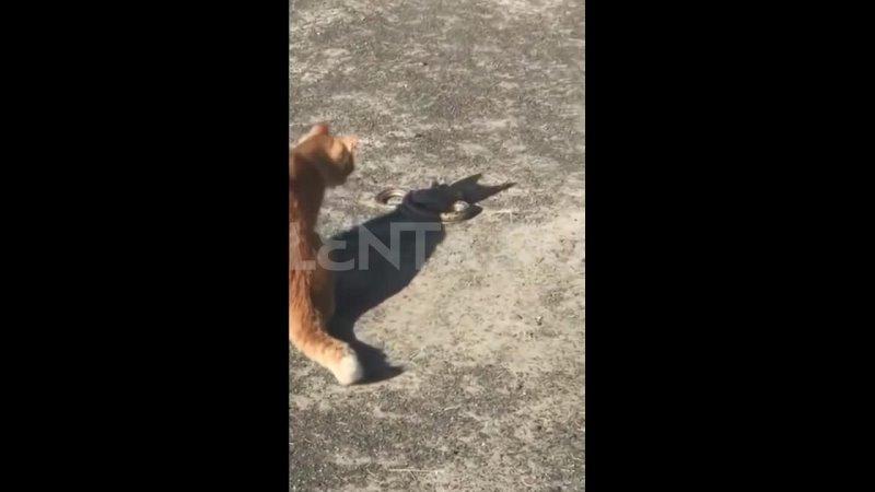 В Херсоне уличный кот ликвидировал сбежавшую из мини зоопарка змею
