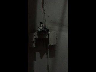 """Видео от """"Приют КоТТедж"""" АНО   г. Череповец"""