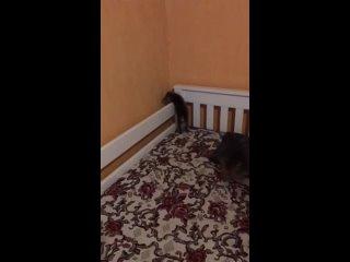Видео от Тани Ласуты