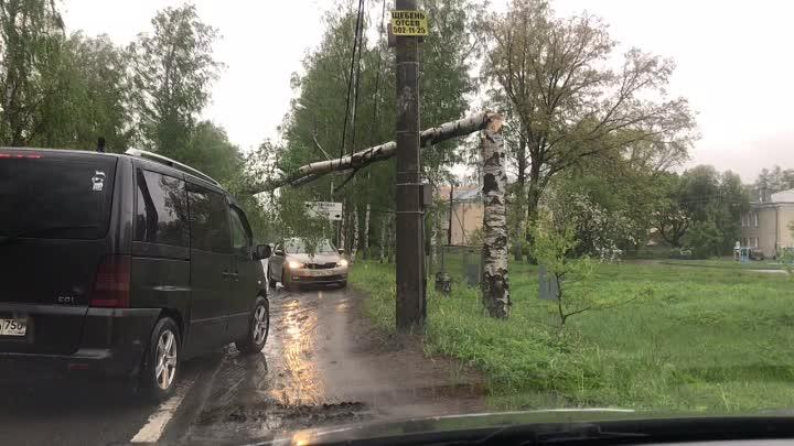 В Зеленогорске упала береза перекрыв дорогу, но крепкие провода дают машинам возможность проезжать д...