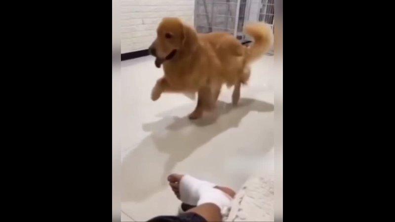 собака хейтер