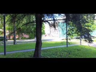 Как Мэрия Великого Новгорода заботится о деревьях...