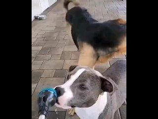 туса собак 😂😂 (Мемарик,Приколы, mem, new, юмор, vine, мемы, новые,треш)