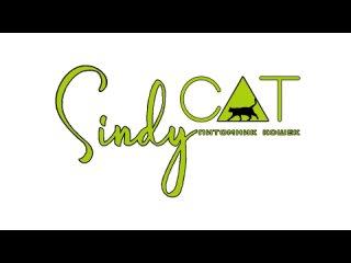 Видео от Питомник кошек SINDYCAT - эксклюзивные котята