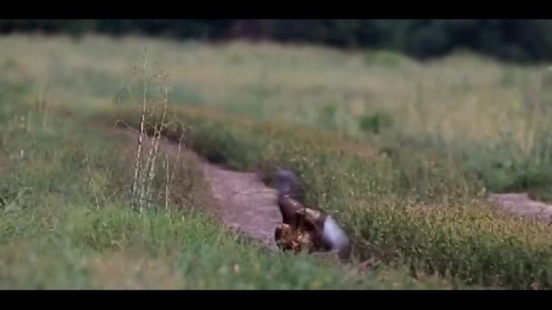 Видео от Воронеж VRN