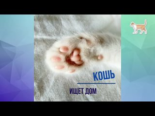 Video by Хвосты и хвостики Ступино Кашира