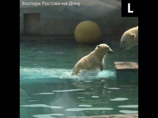 Медведица Айка из Зоопарка Ростова-на-Дону