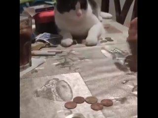 Смышлёный котик ловко повторил трюк с монеткой