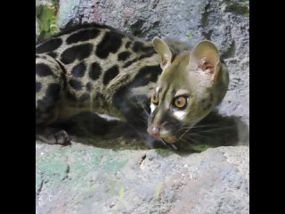 Video by Ярославский зоопарк / Yaroslavl zoo ©