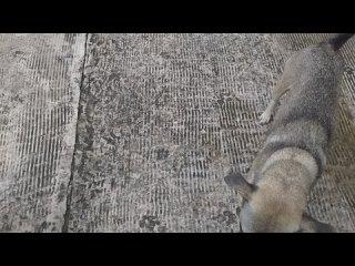 Video by Вьетнам. Этюды и зарисовки