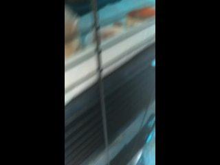Видео от Приют  для хорьков Дом иКо клуба Пушистая звезда