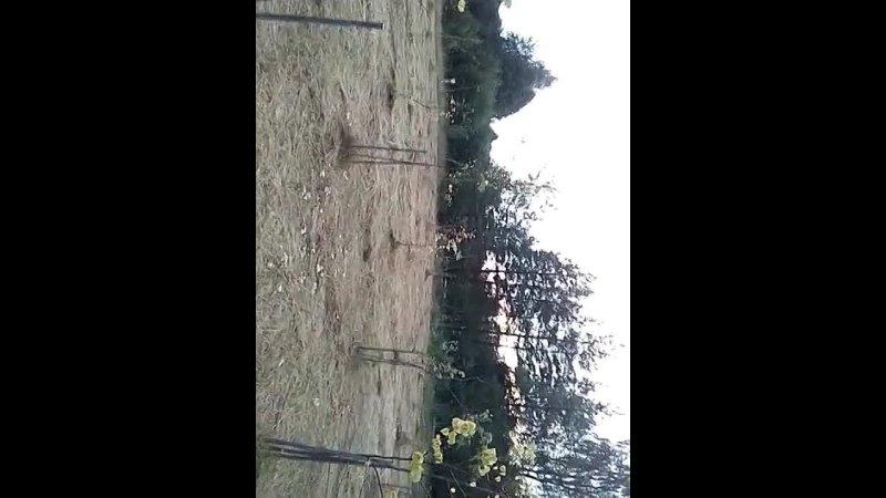 Видео от Правда о посёлке