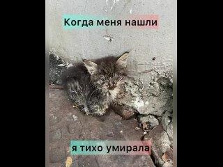"Video by Приют для животных ""Лакшми""   Самара"