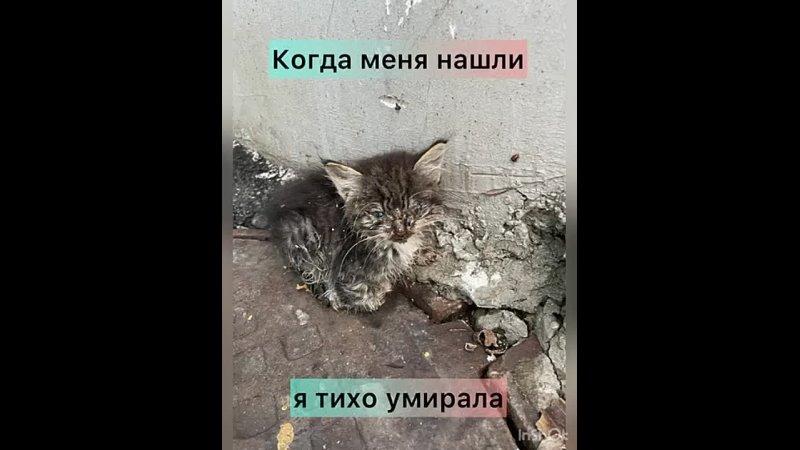Видео от Приют для животных Лакшми Самара