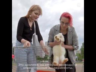 Видео от Кошка ветра