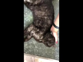 "Video by ОБЗО ""Котодом"" г. Северск"