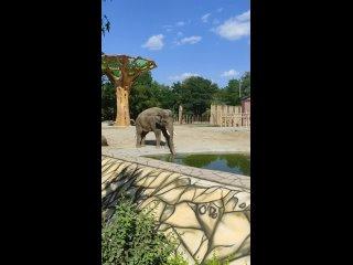 Video by Gleb Luxmaxing