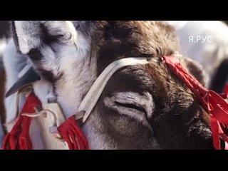 Видео от Петра Каштанова