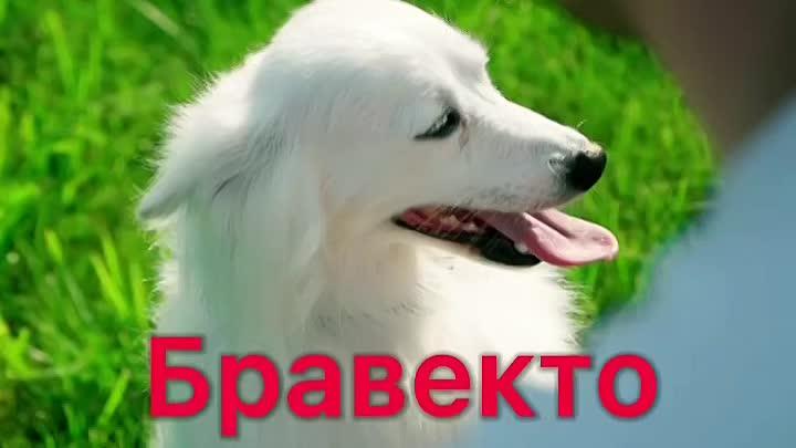Видео от ZOO сервис / ветеринарная клиника в г.Шахты