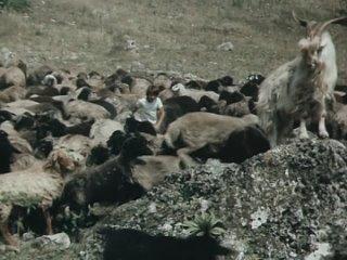 Каникулы Петрова и Васечкина. Обыкновенные и невероятные (1984) 2 серия